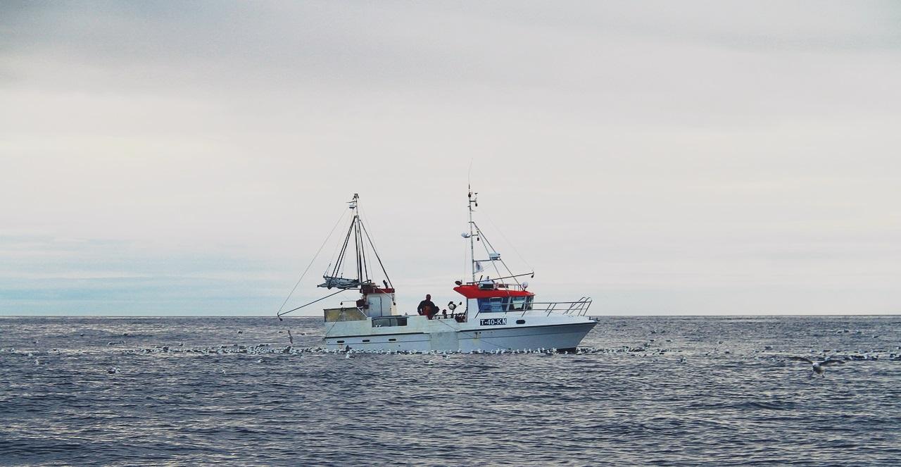 en ensom shark lå ute på Råsa og halte sei fra et enormt flak