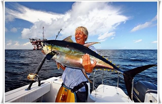 tenk å kunne få oppleve et slikt fiske i Norge igjen (her en gulfinnettunfisk)