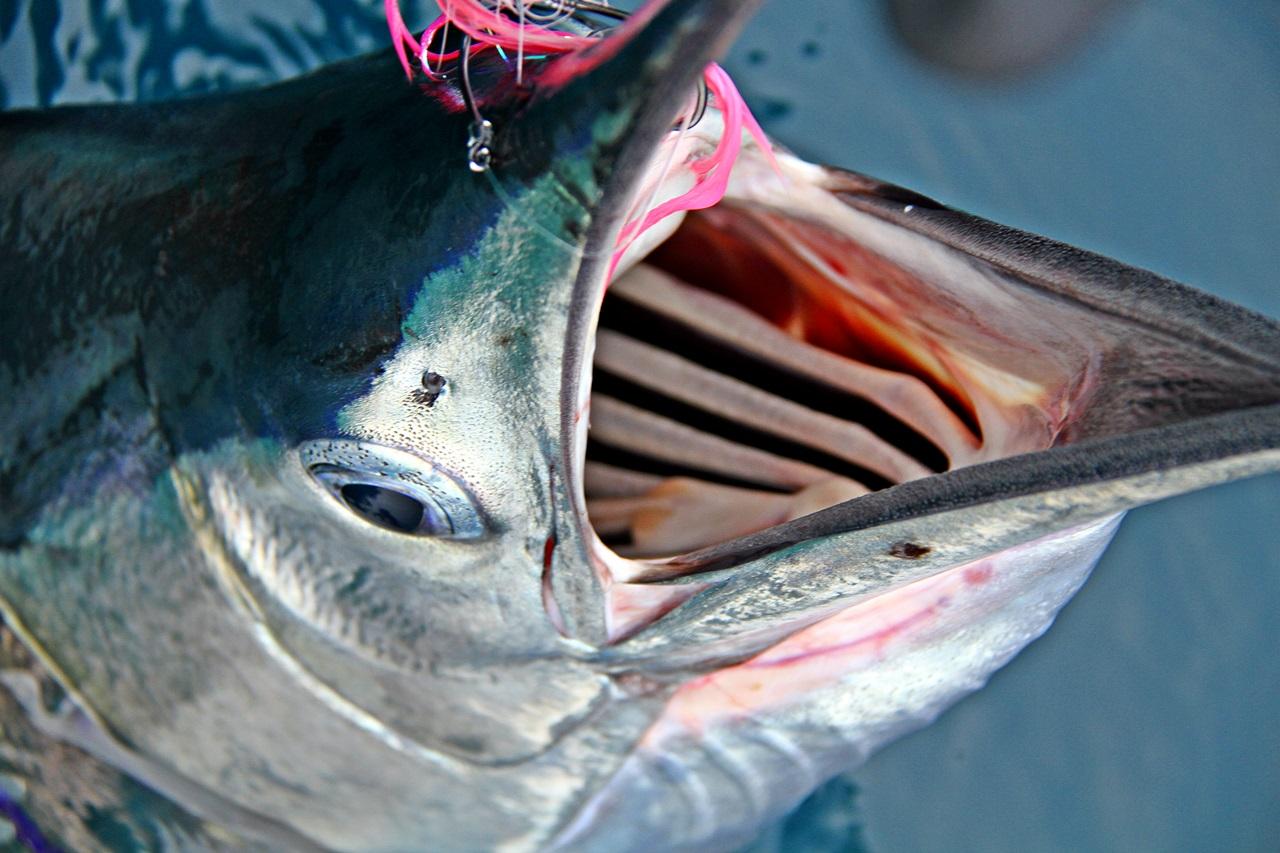 til slutt måtte også denne fisken gi tapt for superkvinnen fra Norge