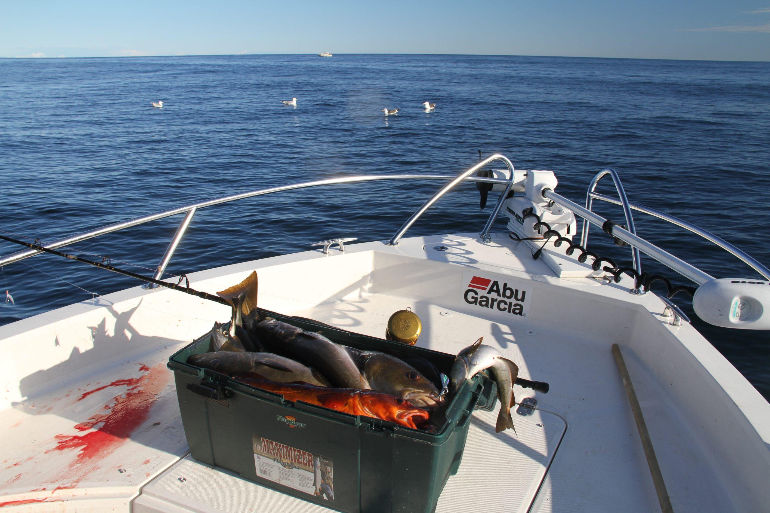du er ofte avhengig av å ligge stille for å få fylt opp stampen med fisk