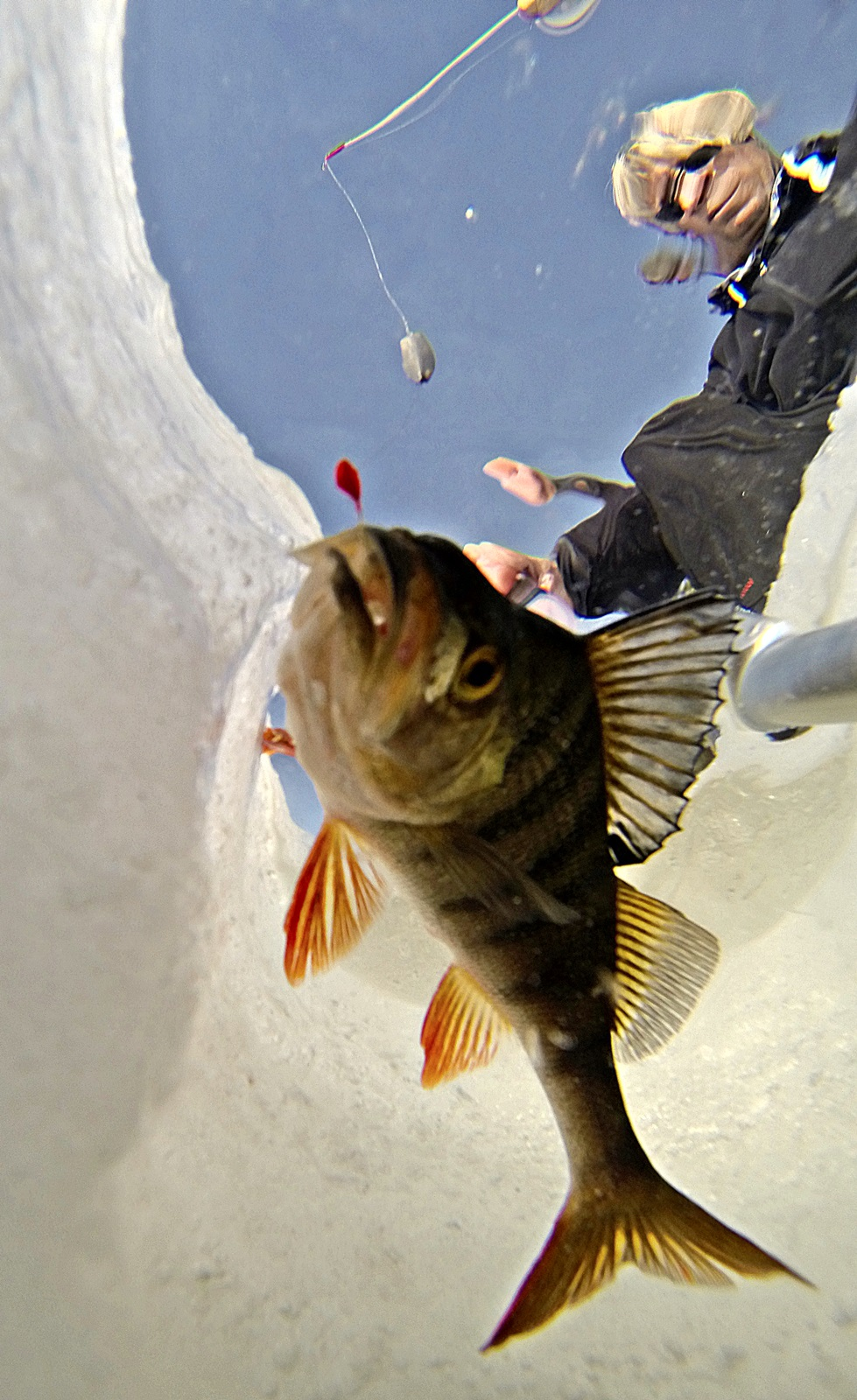 litt abborfiske på isen må til hver vinter
