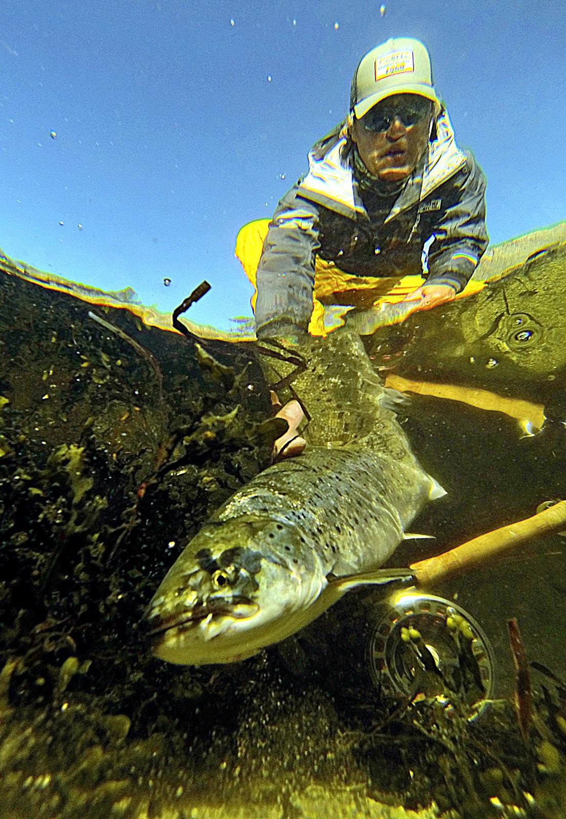 Sjøørreten fikk friheten tilbake, viktig at de flotteste fiskene får sjanse til å reprodusere