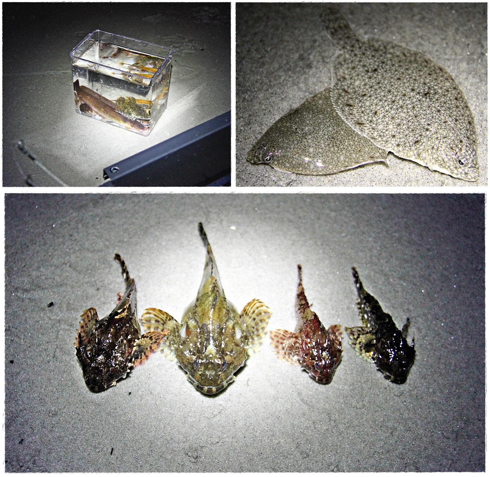 tangbrosme, tangstikling, flyndrer, vanlig og dvergulke var noen av artene denne natten i mars