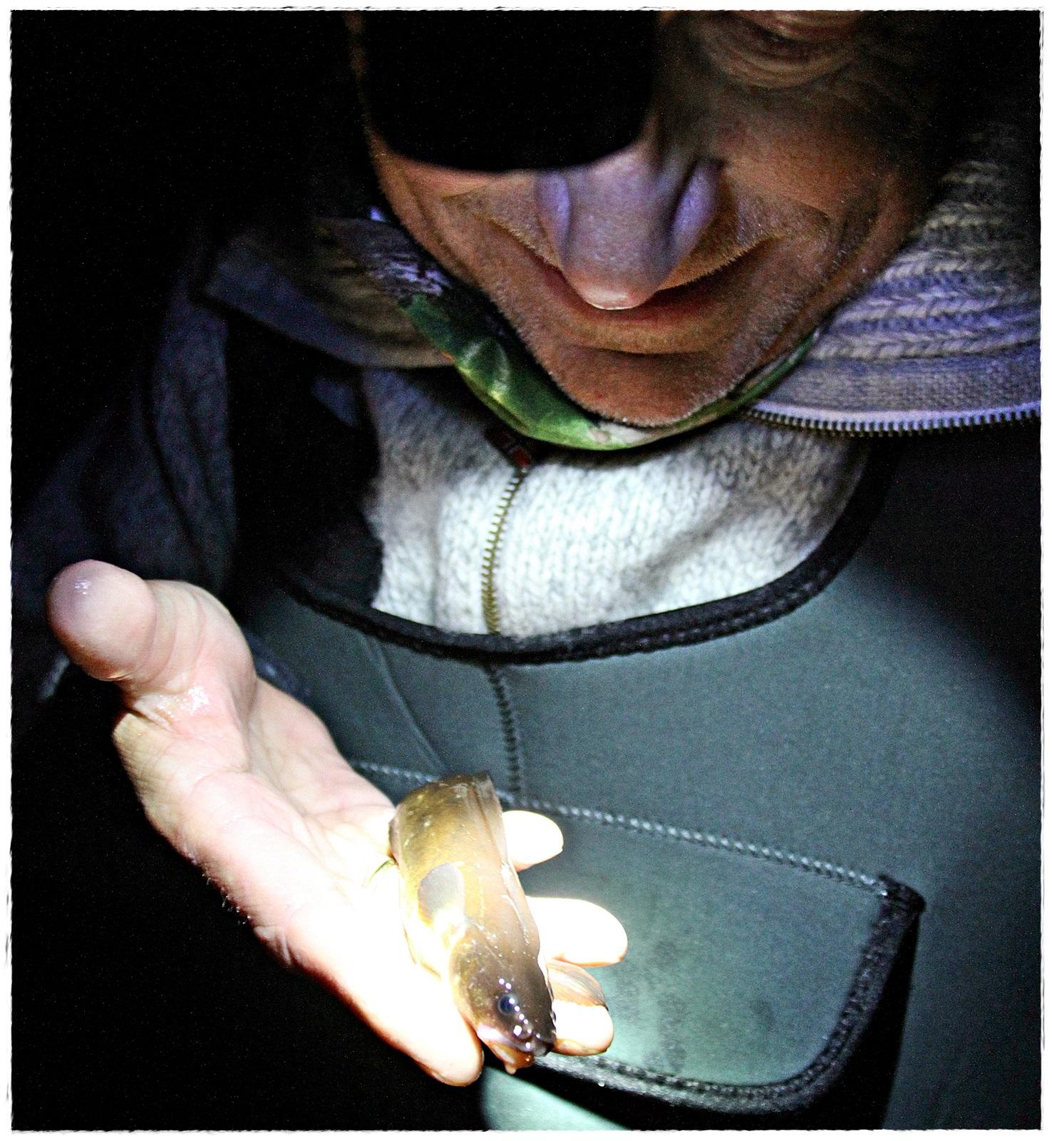 En femtrådet tangbrosme ble art nummer 60 i Lillesand fanget fra vannkikkebrett