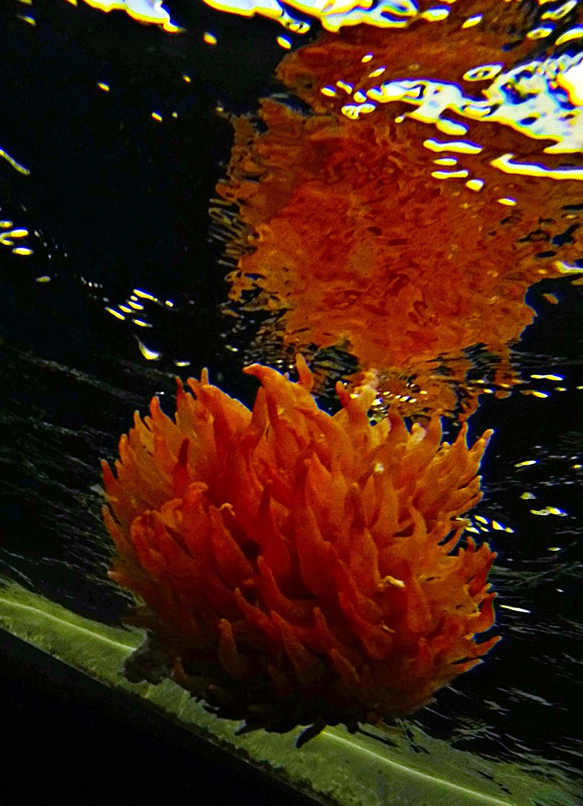 En anemone av noe slag hektet seg på kroken til Asmund