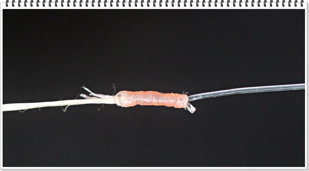 Bruk albright knuten til å spleise multifilament mot fluorocarbon