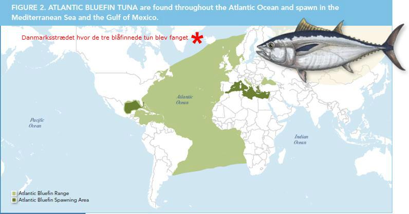 BFT utbredelsesområde Kilde DTU Aqua