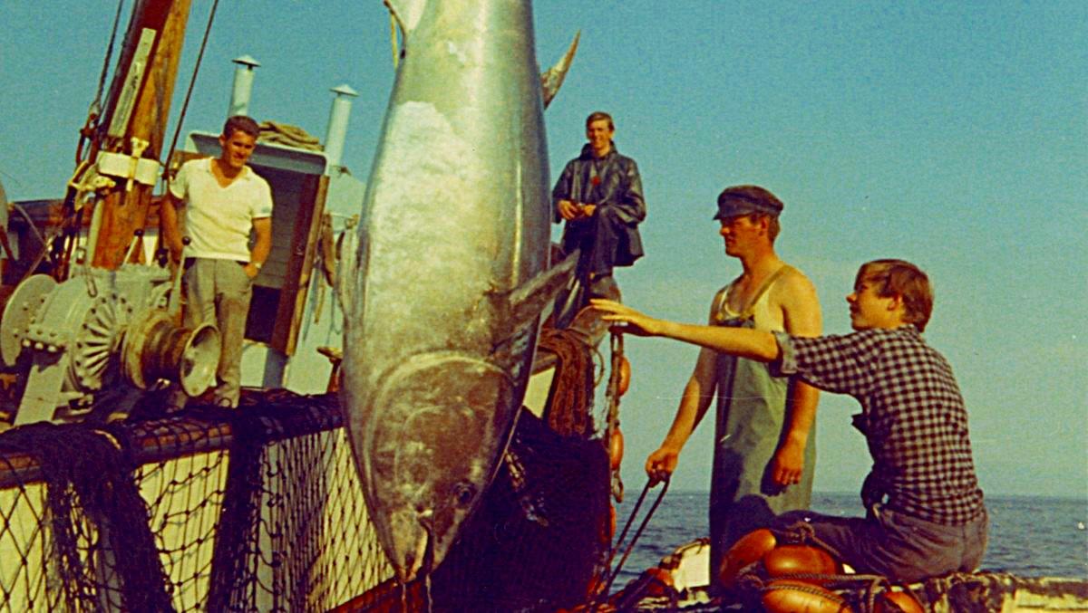 Interesse for sportsfiske har økt kolossalt siden den gang størjene var vanlige å se i våre trakter