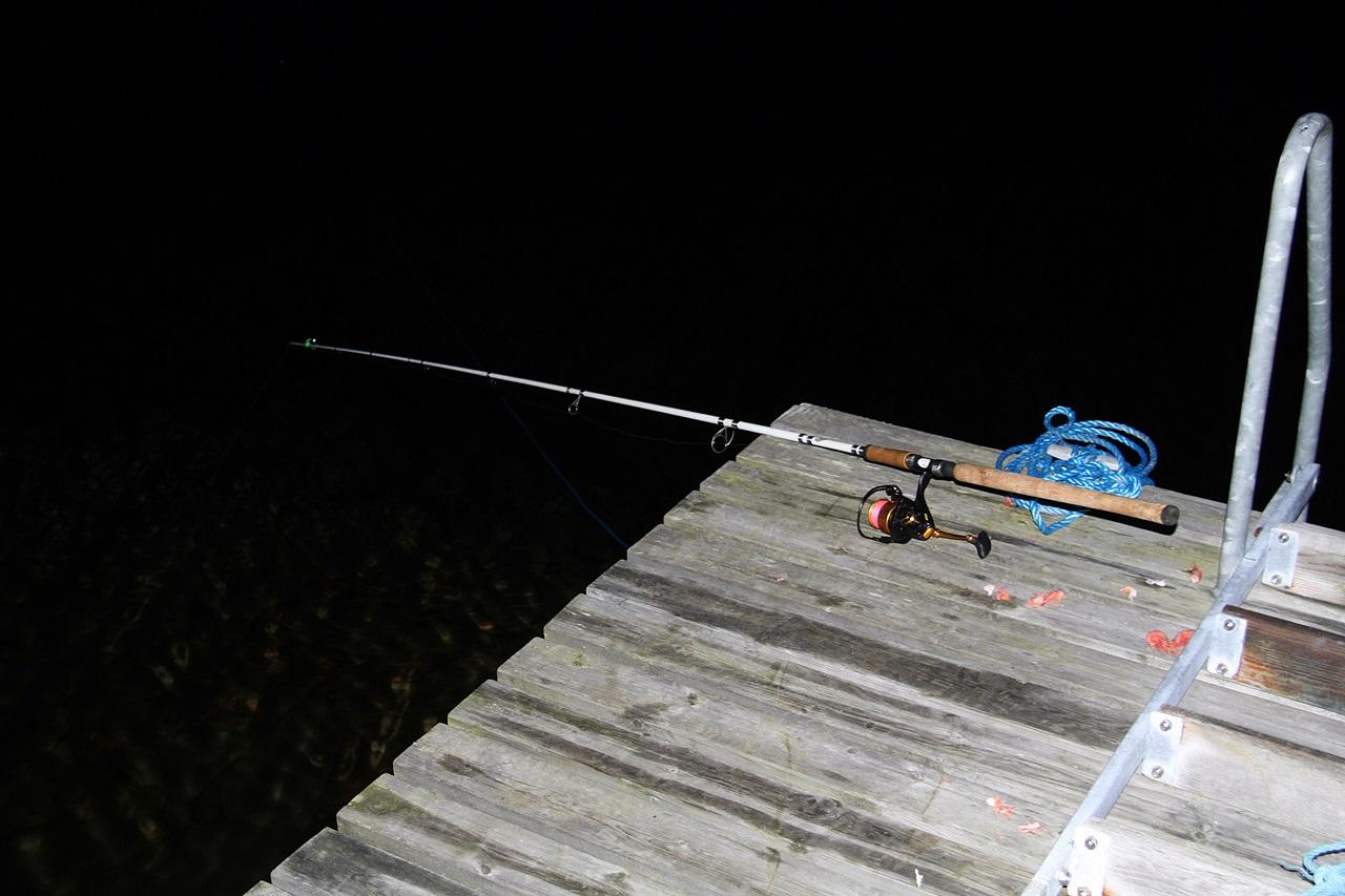 Det er best å fiske i fra land i mørket på den kalde årstiden etter tangbrosmer