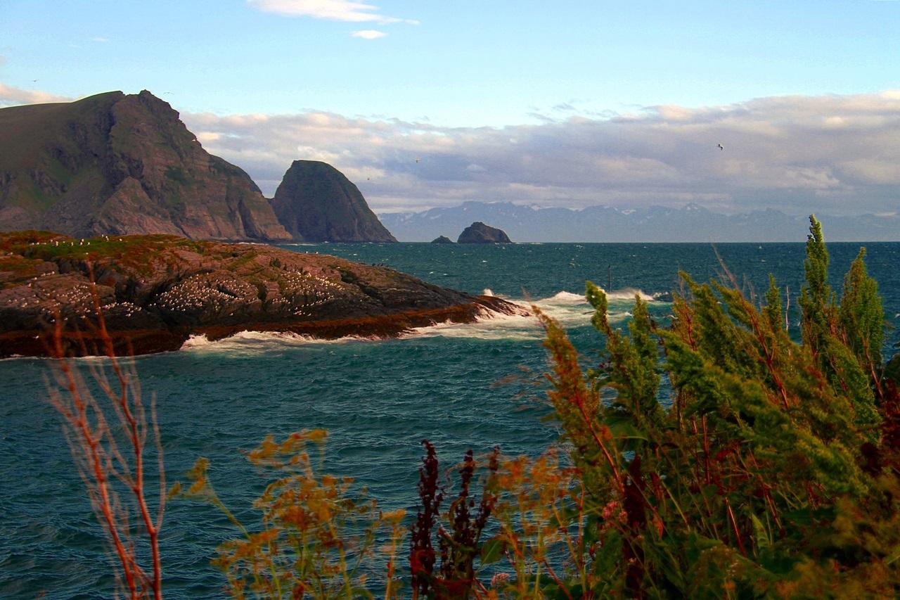 Sørøya er vill og vakker hele året