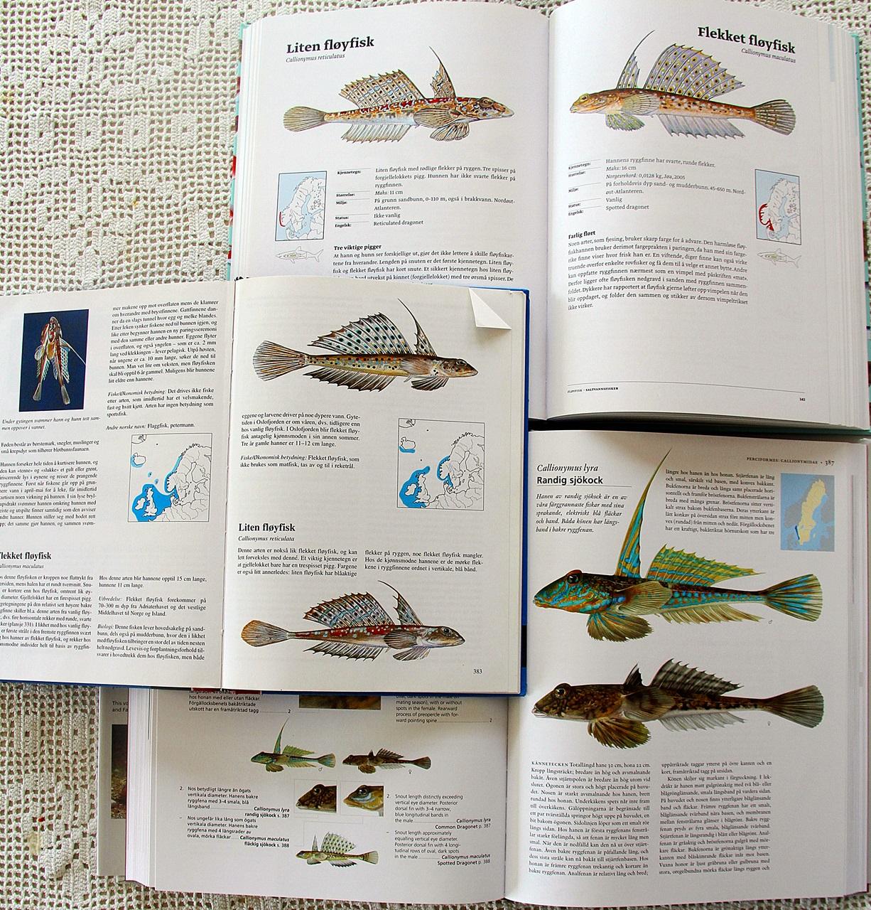 ganske lite info om den lille fløyfisken (spesielt hunnen)