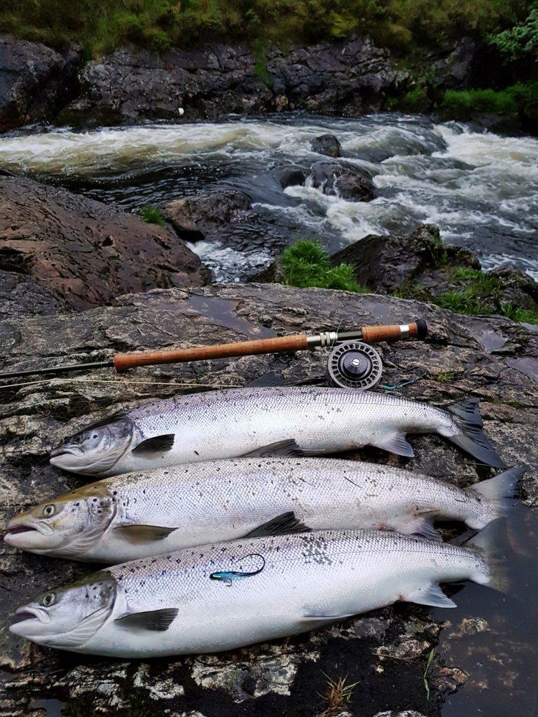 Ogna gir ofte flere fisk, spesielt hvis du treffer god vannstand