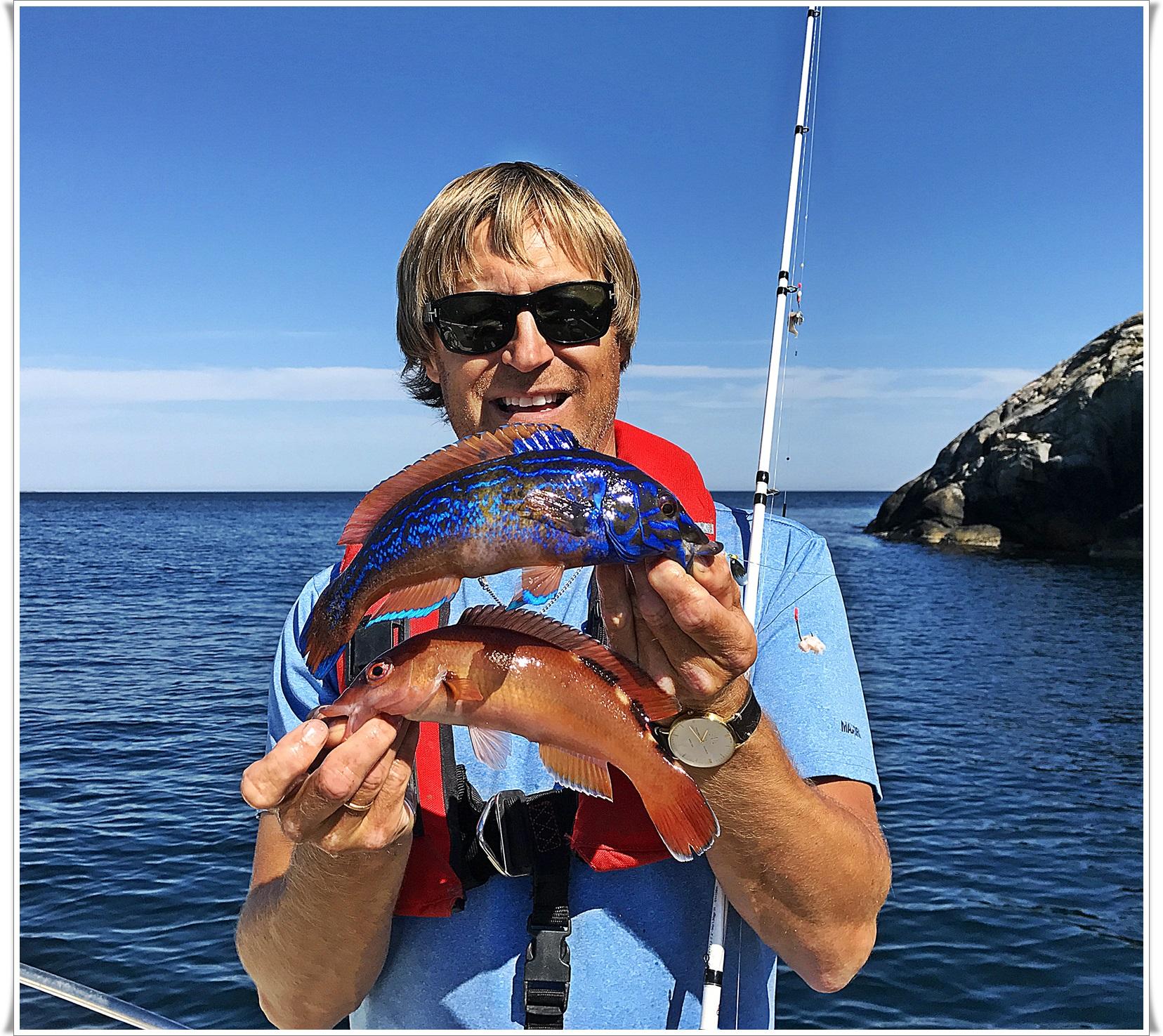blåstål og rødnebb samt mange andre leppefisk finner du inntil bergveggene