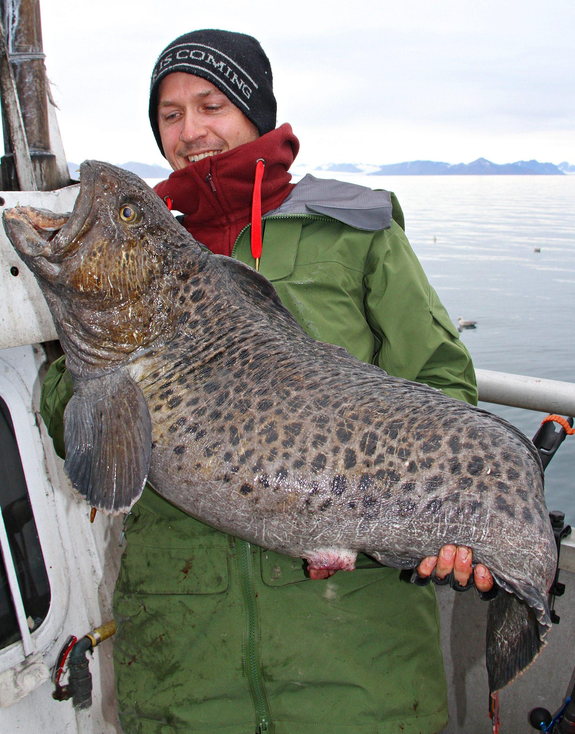 Sverres flekksteinbit på 14 kg ble turens første men også største av den sorten