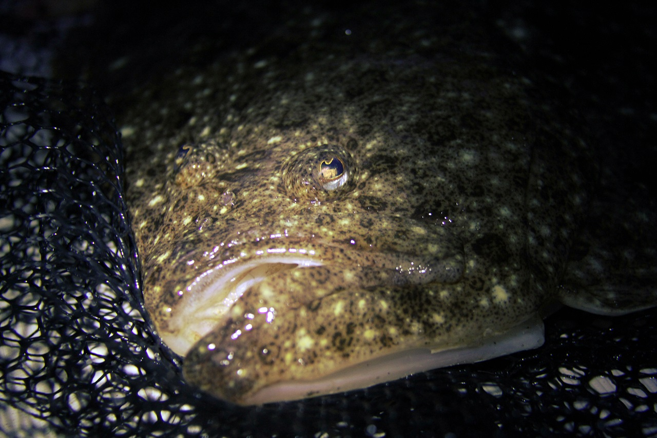 Husk at veldig mange arter faktisk jakter mest og er mest aktive i mørket, derfor er de helt avhengige av å se godt under dårlige lysforhold