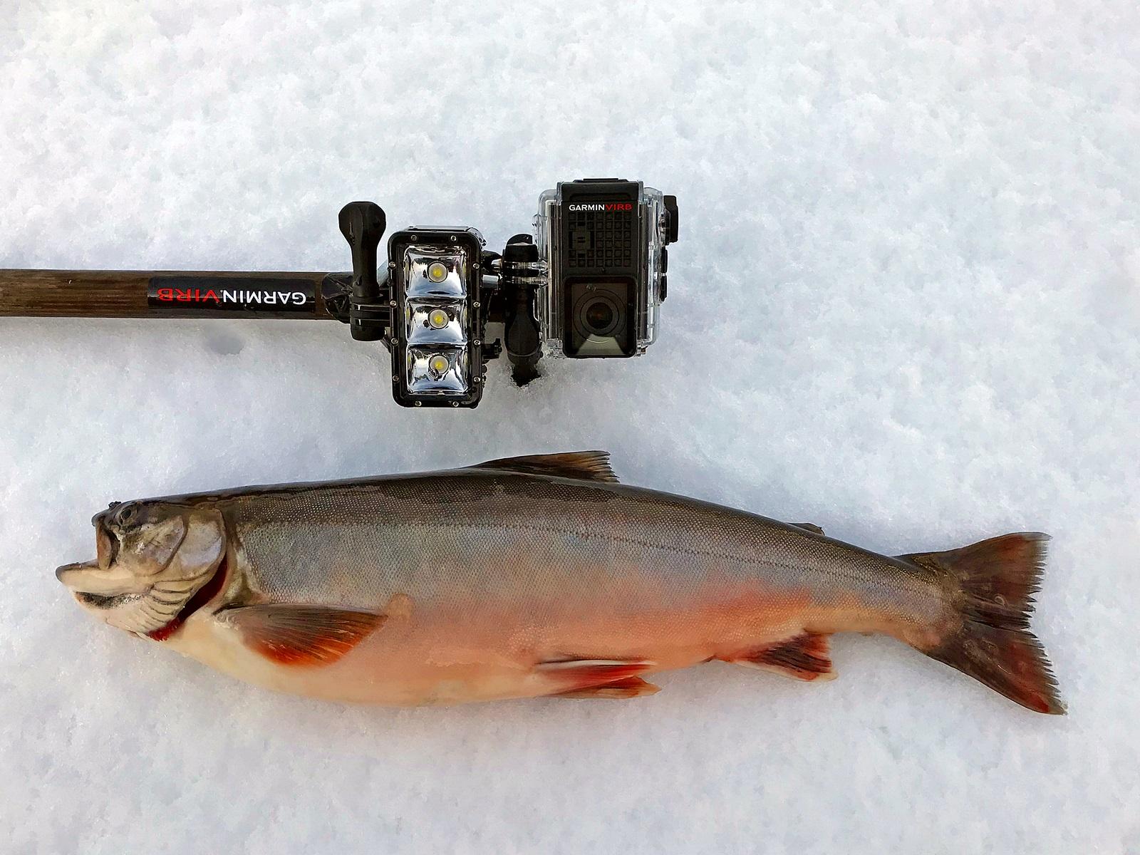 For å ta bilder under vann når det er snø på isen bruker jeg Garmin Virb kamera og ekstra lys