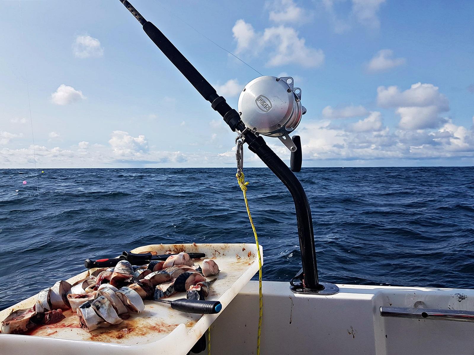 mange metoder ble brukt her chummes det med makrell